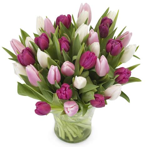 tulipaner rosa